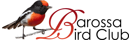 Barossa Bird Club Inc.